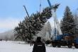 Главная елка страны начинает свой путь в Кремль