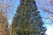 Главная общероссийская новогодняя елка страны