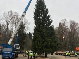 О подготовке к общероссийской новогодней елке.