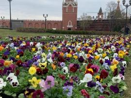 Подготовка территории Кремля и Александровского сада к первомайским праздникам 2019 г. завершена